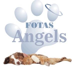FOTAS Angels