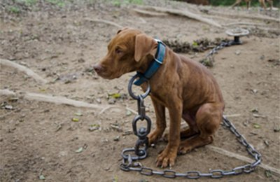 chained-dog-w400h260