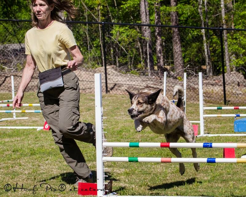 palmetto-dog-club-agility-course-at-woofstock-3