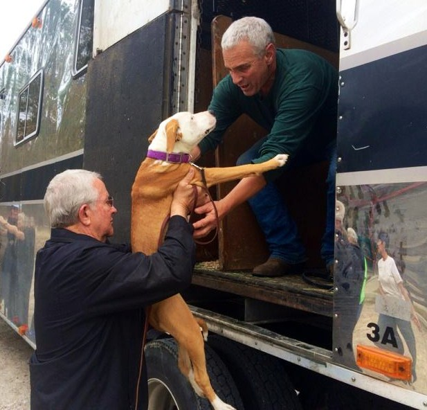 When local forever homes cannot be found for some County Shelter dogs, their lives are often saved by transporting them to no-kill rescue organizations.