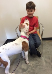 Yeva, a year old bully mix and a Hall of Famer, loves up Noah Jacobs at the Shelter