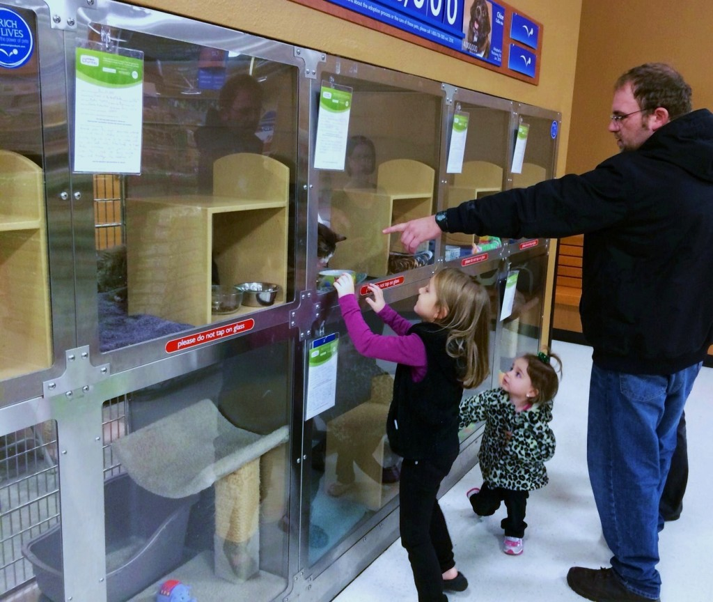 PetSmart customers often check out the adoptable cats before starting their shopping.
