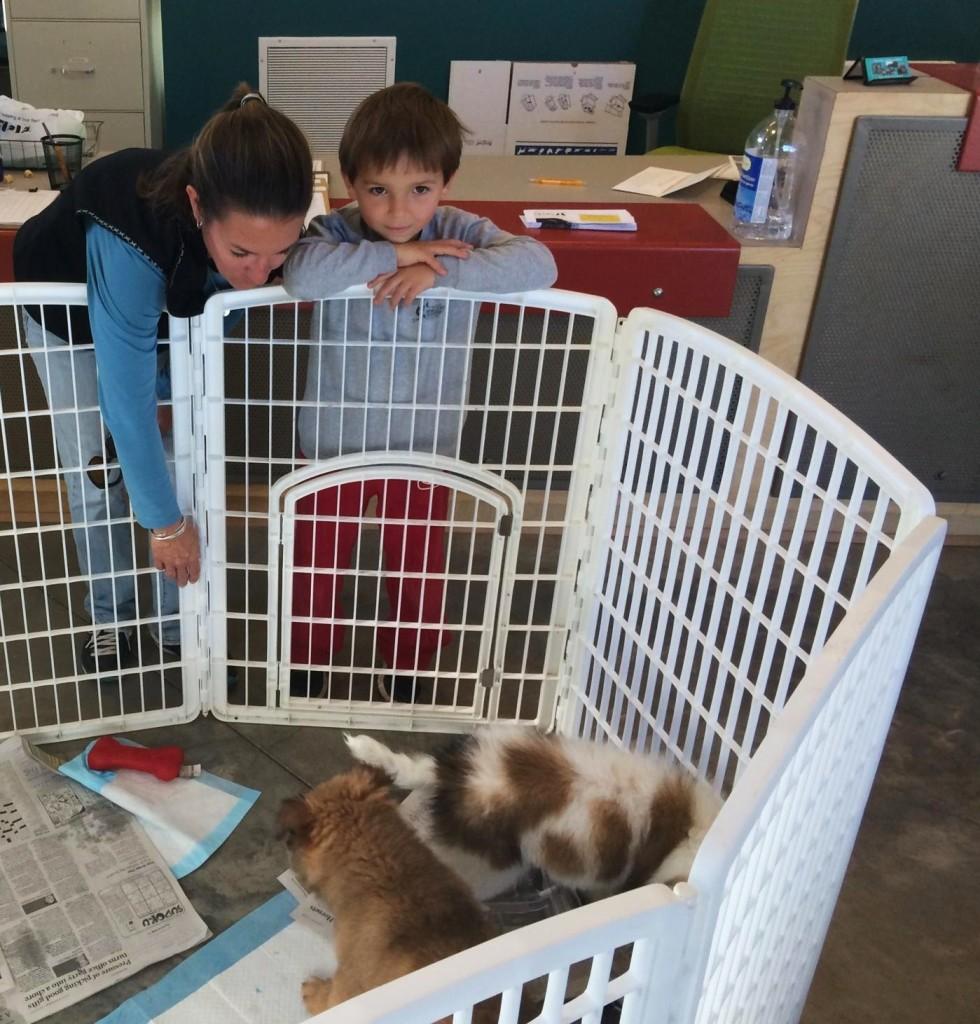 FOTAS Volunteer Tara Heuberger, with her son, Tegan, walks and helps socialize shelter dogs.