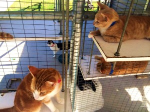 The ACAS cat adoption facility has both indoor and outdoor areas