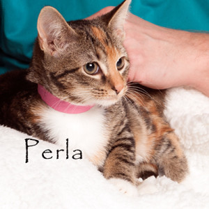 fotas_adoption_pets_aiken