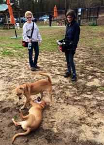 FOTAS Volunteer Bonnie White (left) and Canine Coach Darling Rios manage a canine playtime session at the Aiken County Animal Shelter.
