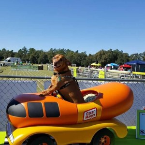 The FOTAS Woofstock Doxie Derby Festival is Saturday, May 6th