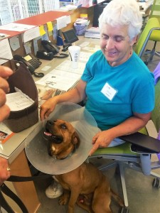 Hayden, wearing an e-collar so he doesn't lick at his stitches, visits front desk volunteer Joyce Egge.