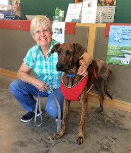 Tallulah is adopted by Deborah Winall of Trenton. The brindle Hound's back left leg had to be amputated following a severe infection that threatened her life.