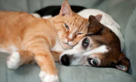 orange-cat-dog-cuddle