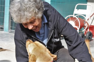 Volunteer Jackie Edel works with the County Shelter dogs nearly every day.