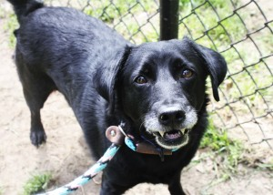Bo is a senior but has the energy of a much younger dog.