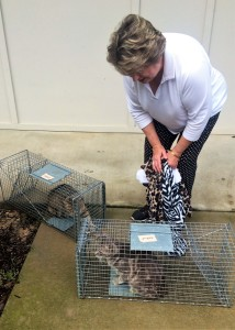 Connie Jeffcoat of Wagener picks up two community cats she had spayed at the County Animal Shelter.