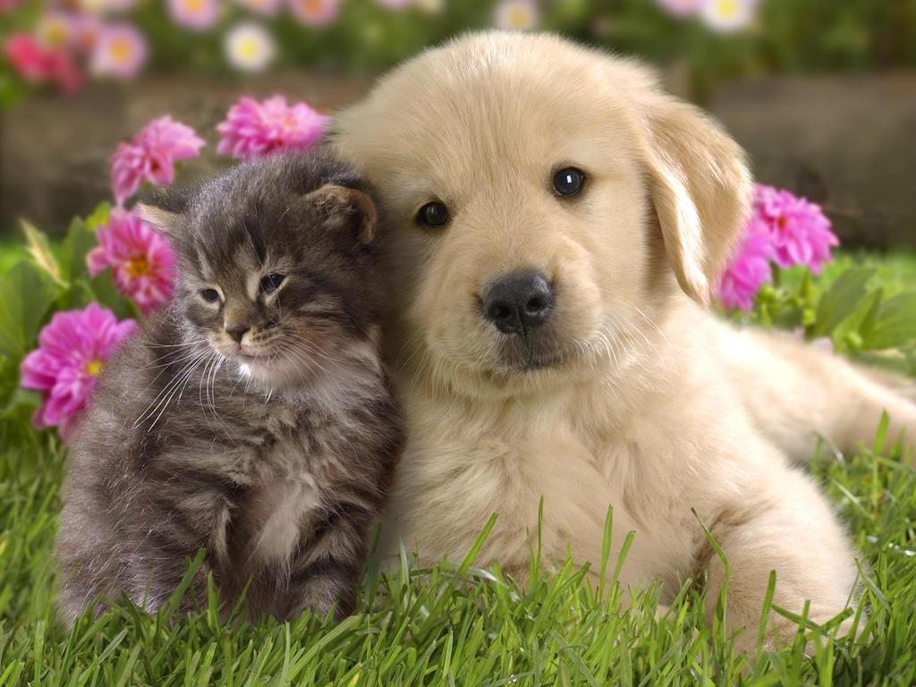 Donate Friends Of The Animal Shelter Aiken Sc