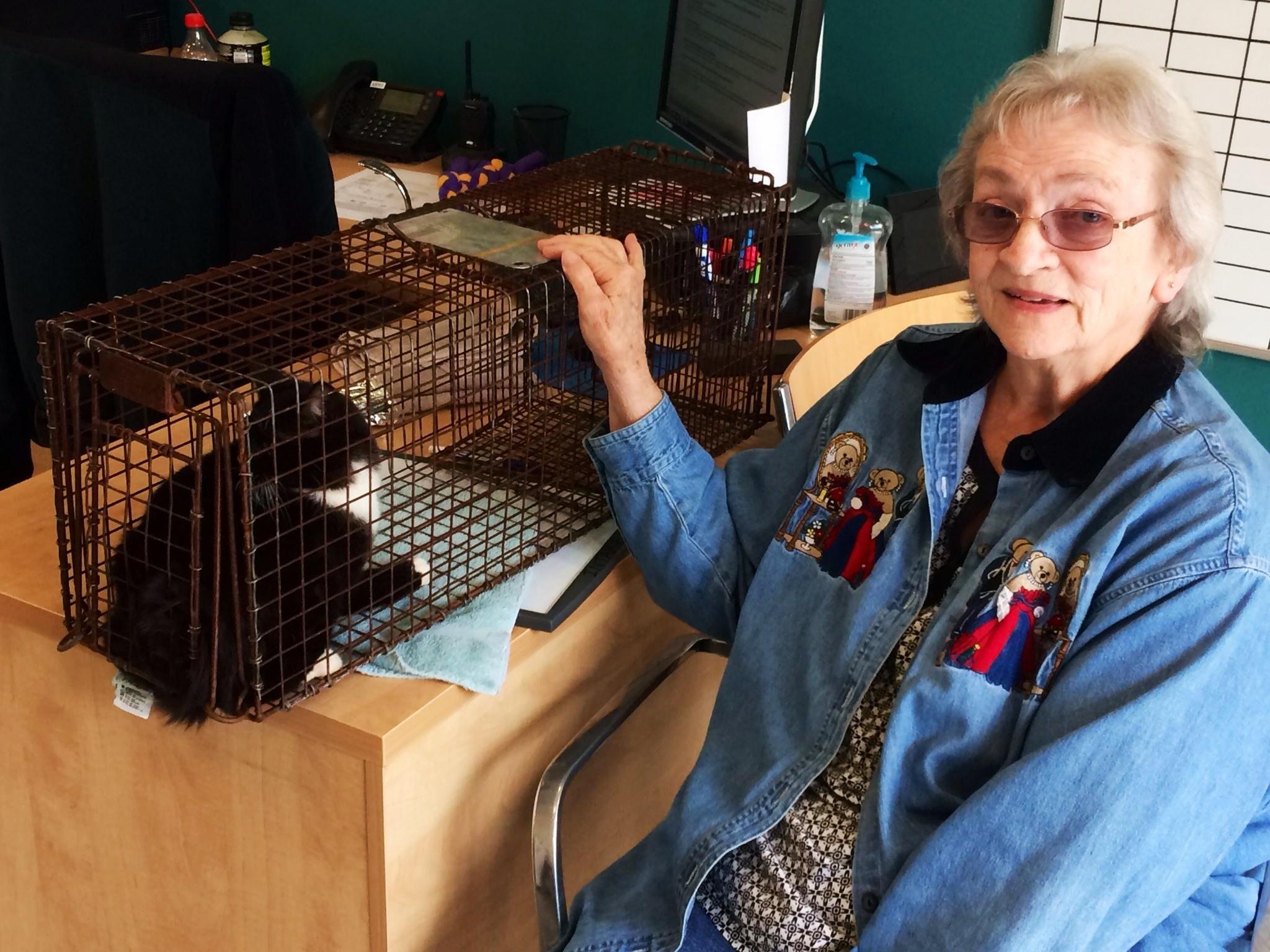 Ellen Parker brings a community cat to ACAS