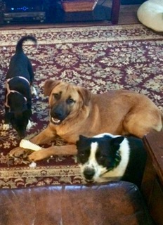 Henry and his new pals in foster care share a bone.
