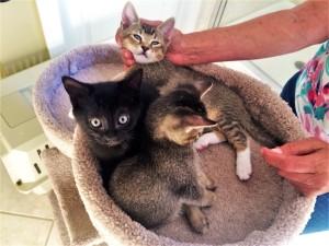 debbie snyder kittens