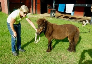 Gina Salatino with the mini horse