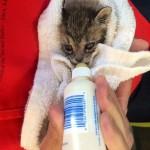 kitten bottle feeder