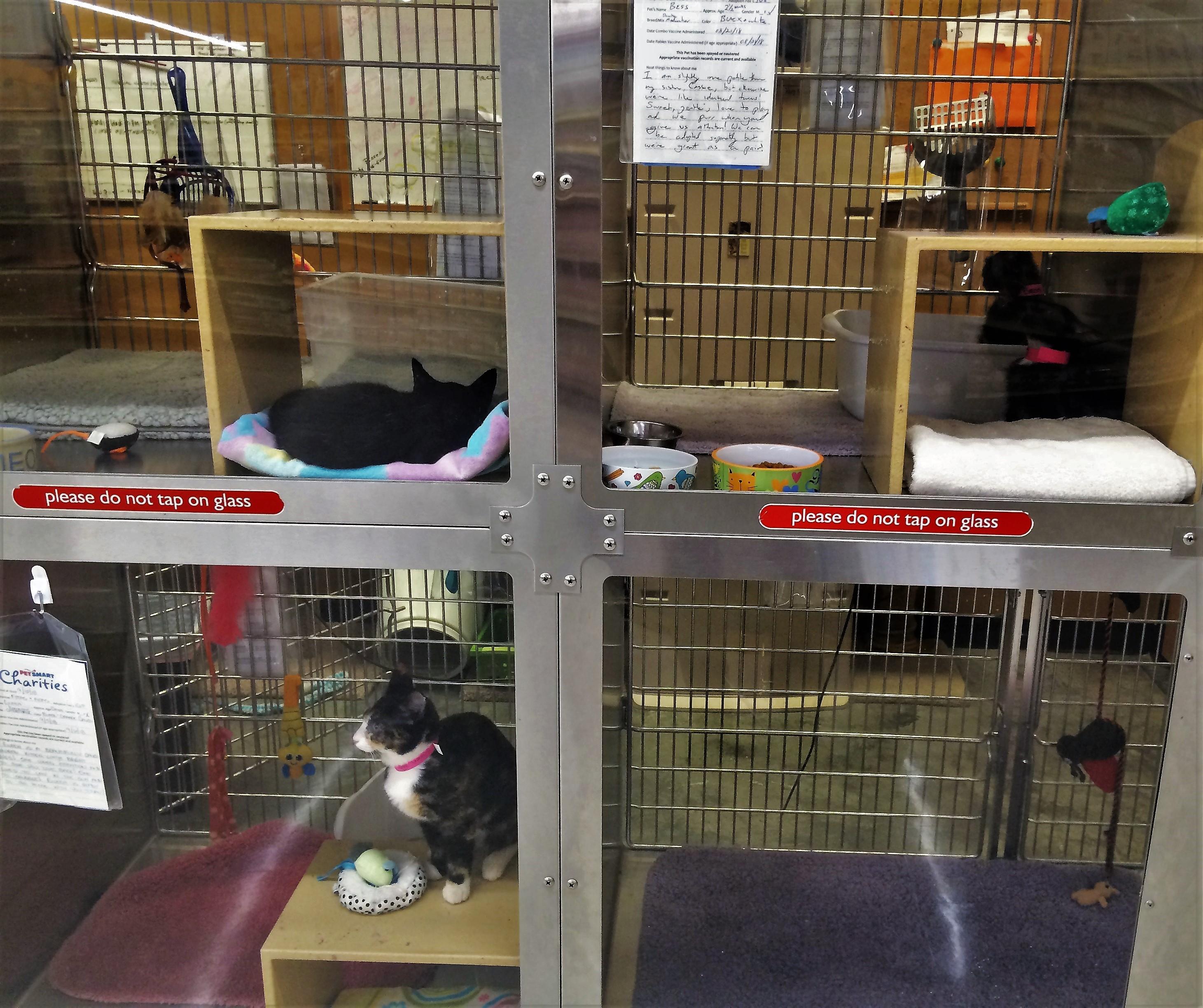 Aiken PetSmart Cats Get Care and Comfort from FOTAS Volunteers
